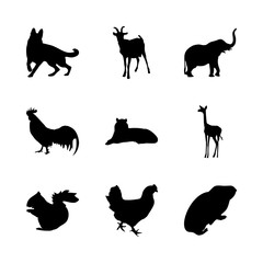 icon Animal with pattern, decoration, cockerel, squirrel and desing
