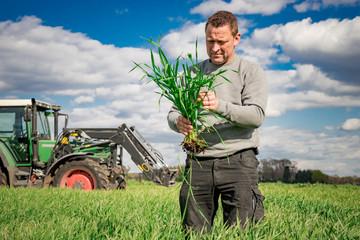 Ackerbau - Getreidefeld, Landwirt überprüft Bestandsentwickung