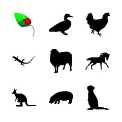 icon Animal with hen, mare, cock, savanna and coloring