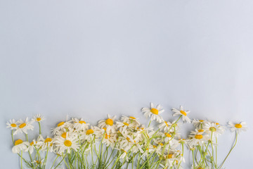 White daisies on a light background