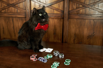Black cat in red butterfly plays poker