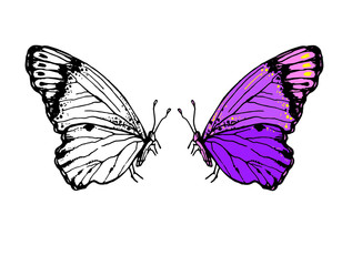 Vector sketch hand drawn illustration of butterflies with folded wings
