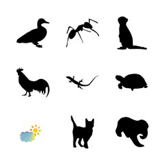 icon Animal with meerkat, pet, desing, monochrome and engrave