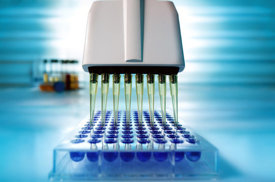 Multi channel pipette loading biological samples in microplate for test in the laboratory / Multichannel pipette loading samples in pcr microplate with 96 wells