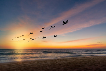 Wall Mural - The freedom of birds,freedom concept.Silhouette flock of birds in v shaped flying over the sea at sunset.