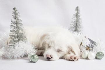 Parsnip's White Christmas 1
