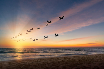 Wall Mural - The freedom of birds,freedom concept.Silhouette flock of birds flying over the sea at sunset with sunray.