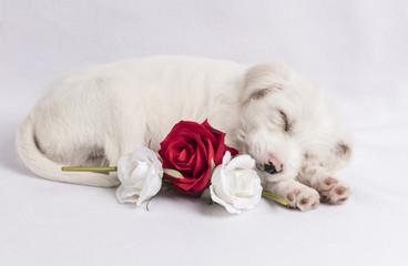 Parsnips Roses 2