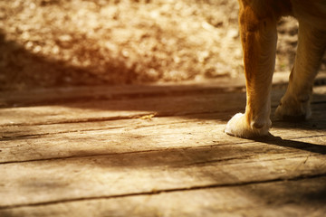 Dog's paws on wood, vintage color