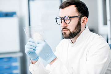 Male laboratory assistant working with bacteria in petri dish in the bacteriological department