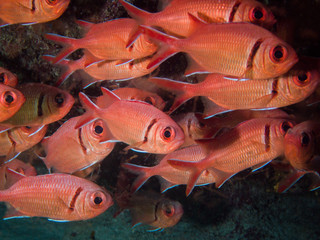 Solder fish at Sal Island Cape Verde
