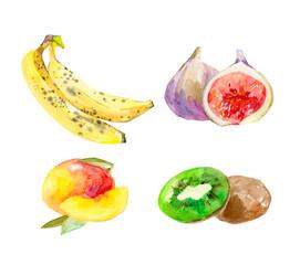 Watercolor hand drawn set fruist hand-painted isolated. Eco food menu background. Vector colorful illustration. Banana, mango, kiwi, ginger.