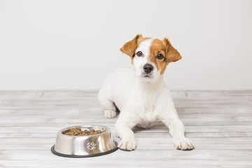 cute small dog sitting and waiting to eat his bowl of dog food. Pets indoors. Concept Wall mural