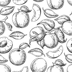 Apricot seamless pattern. Vector drawing. Hand drawn fruit