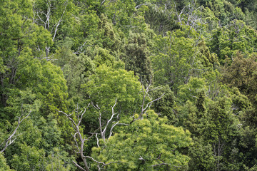Sweet chestnut and juniper trees covering a hillside.