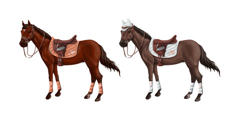 Set of horses of different suits in different ammunition for jumping - saddle, cap, bridle, halter, wagtrap, stamping. Riderless.