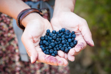 Fresh ripe blueberries in the woman hands. The concept of summer and outdoors.