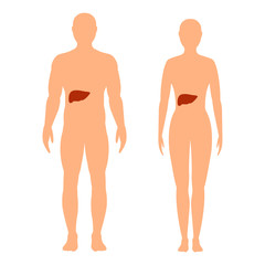 Silhouette of male and female with the designation of the liver.
