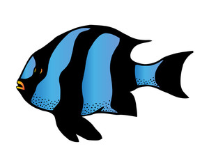 Coral reef tropical fish vector illustration. Vector sea fish isolated on white background. Aquarium fish icon.