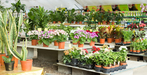Photo of rows with colorful blooming plants