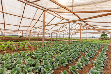 Inside view greenhouse. Angola. Cabinda.