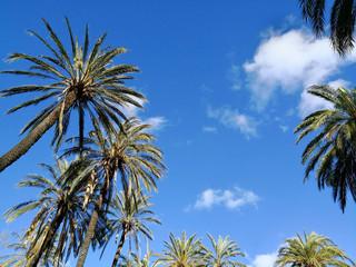 Palmen und blauer Himmel Hintergrund