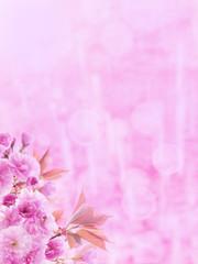 Sakura tree pink flowers vertical background