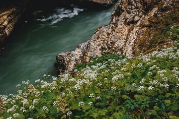 flowers near of river in mountains