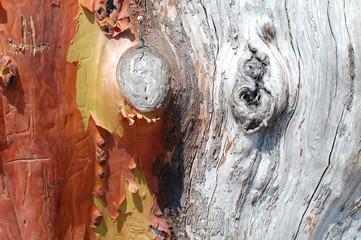 Madrona Wood Texture