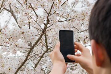 スマホで桜を撮影する人