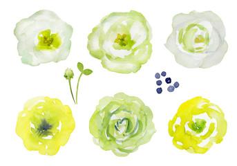 黄色と白の花のセット 水彩イラスト