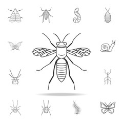 wasp icon. Detailed set of insects line illustrations. Premium quality graphic design icon. One of the collection icons for websites, web design, mobile app