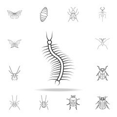 centipede icon. Detailed set of insects line illustrations. Premium quality graphic design icon. One of the collection icons for websites, web design, mobile app