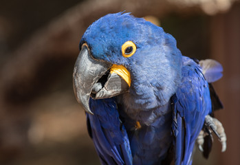 blue macaw is talking to you
