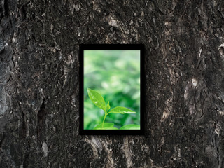 Picture of green leaf in photo frame on old tree bark texture.