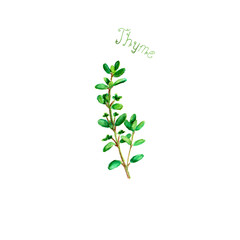 Thyme herb spice isolated on white background