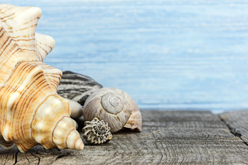 sea vacation background. beautiful seashells on wooden boards surface, closeup