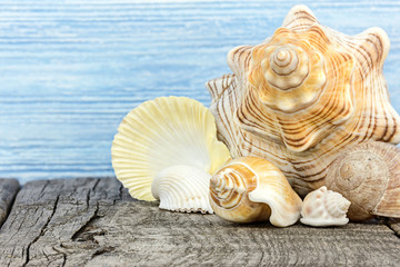 vacation background with bright seashells on grey weathered wooden boards
