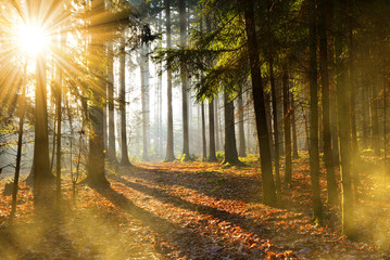 Beautiful morning scene in the forest with sun rays. Autumn landscape.