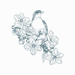 Vector illustration of hand drawn bird on blooming brunch. Graphic style, beautiful illustration. Engraving retro style