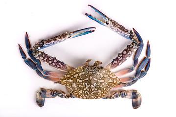 Raw chesapeake blue crab, Blue crab, Blue swimmer crab Or Blue manna crab on white background