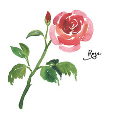 Sketch watercolor red rose with stem and leaves