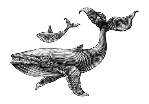 Big whale and little whale hand drawing vintage engraving illustration