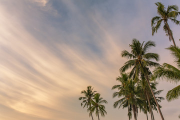 Palm trees against sunset sky on Koh Kood island in Thailand. Tropical holiday concept, copy space
