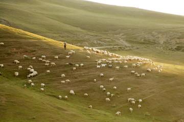 Rural Summer Landscape with Sheeps in Amasya