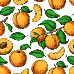 apricot colorApricot seamless pattern. Vector drawing. Hand draw