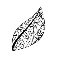 leaf ecology single icon
