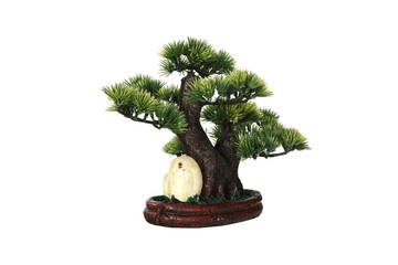 Miniature bonsai tree on white