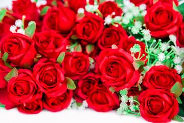 Rose - Flower, Flower, Single Flower, Petal, Plant