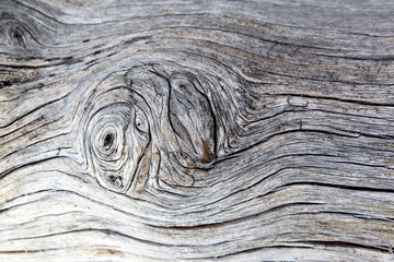 Polished waves wood texture with knot in the middle